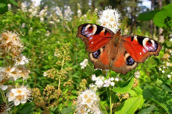 farfalle-in-crisi